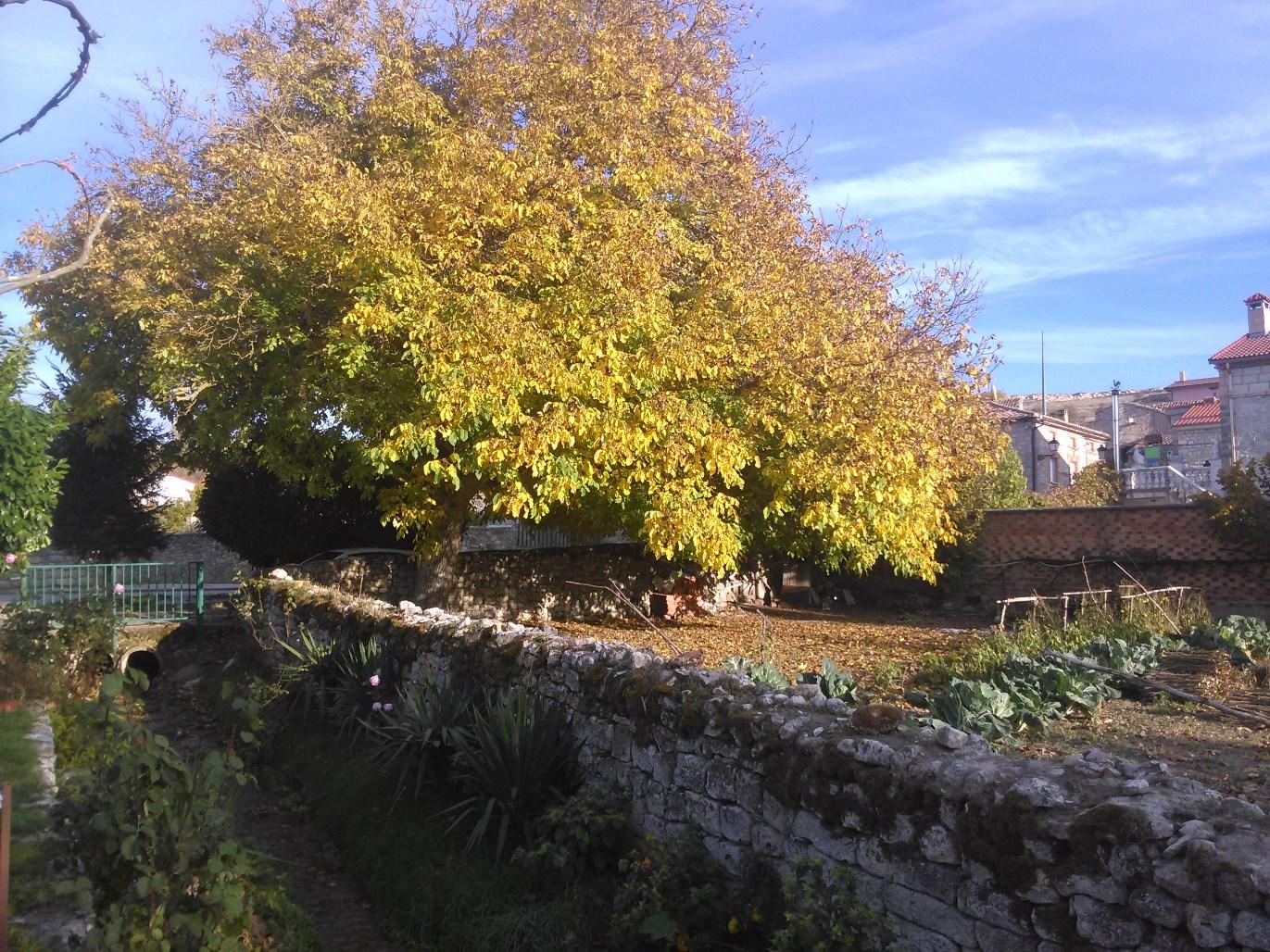 llego-el-otoño-1.jpg