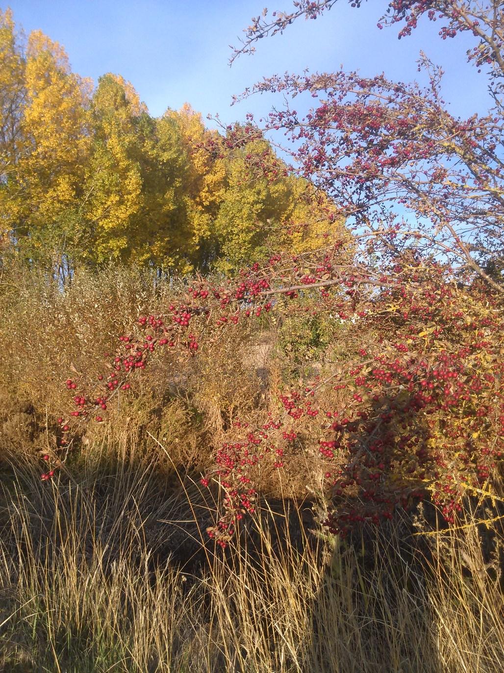 llego-el-otoño-5.jpg